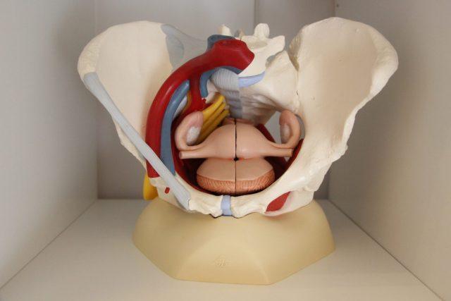 Anatomía suelo pélvico