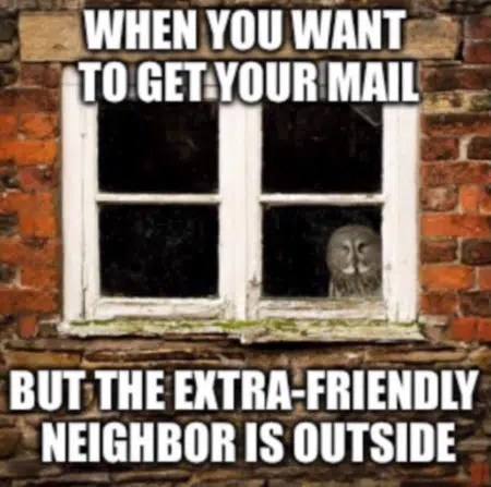 Image result for introvert humor