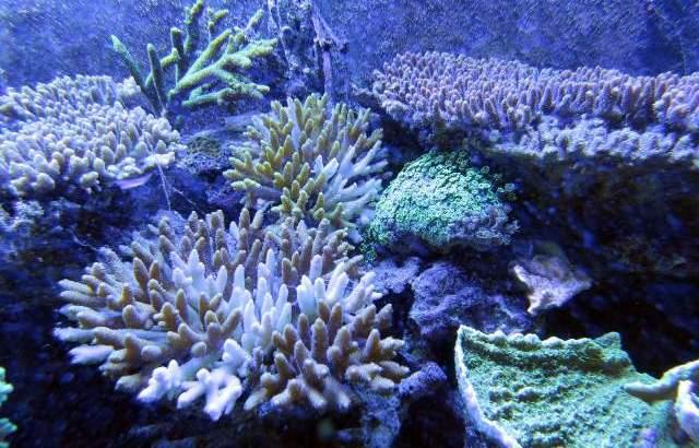 ❄魂の願いと解放⑥なぜ?『呼吸するヨガスタジオ』か?沖縄産珊瑚の海ののこり香