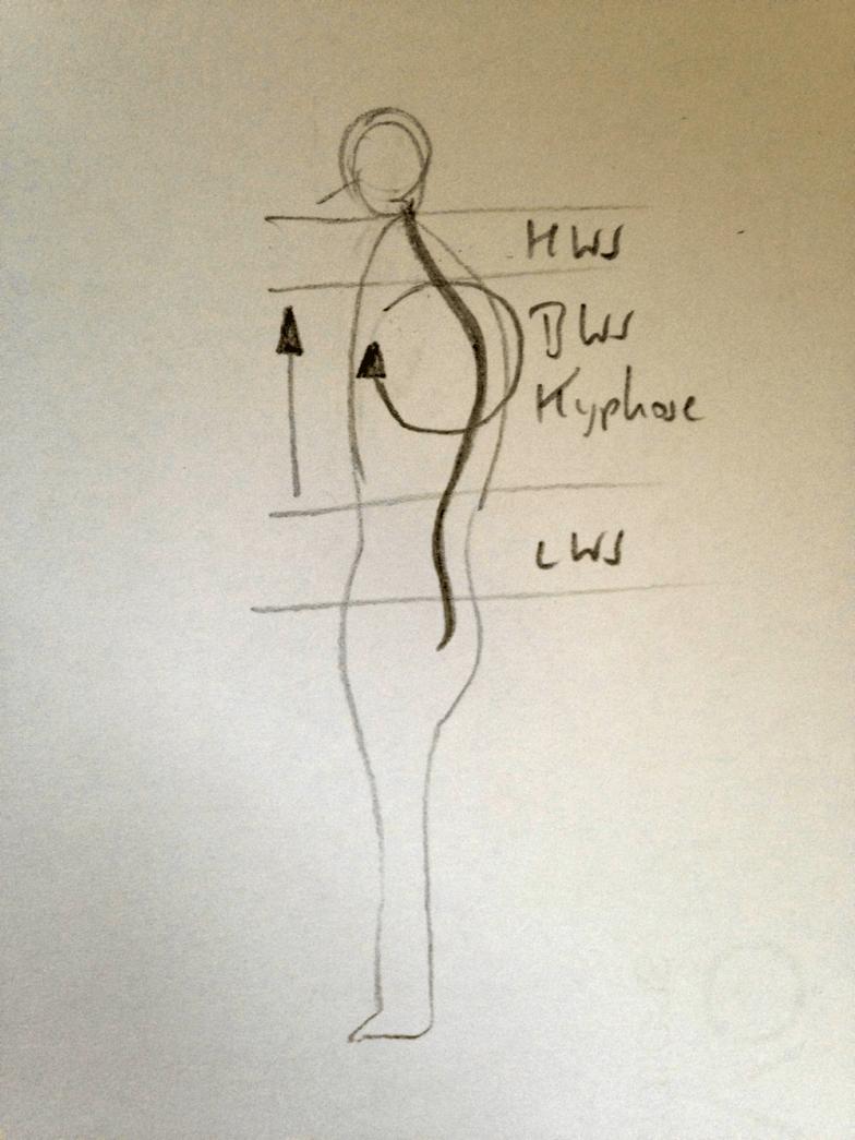 Rückführung der Wirbelsäule aus dem Rundrücken in die Aufrichtung durch das Längen der Vorderseite des Oberkörpers, Heben des Brustbeins, Rückführung der Schultern und Absenken der Schulterblätter