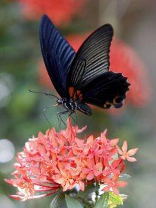 gran mariposa flor