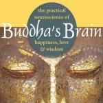 buddhas brain cover