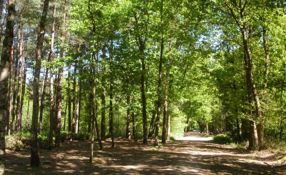 Natuur en Mystiek in Oost Zeeuws Vlaanderen