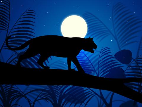 Tiger School und Panther gehören in den Dschungel. Dieser Yogabeitrag handelt von dem berliner Yogadschungel. Weil es viele verschiedene Yogastile bzw. Yogastyle und Yogarichtungen und noch mehr Yogastudios in Berlin gibt.
