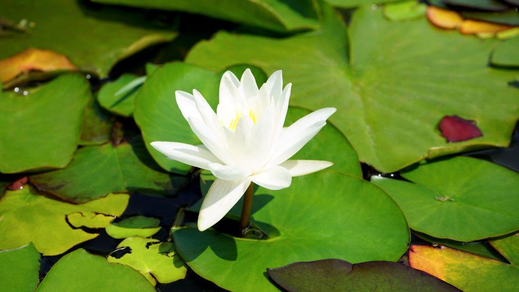 Le 3 fasi verso il cambiamento secondo l'Astrologia Vedica 1