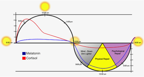 cortisol-cycle