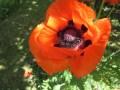 2014 Juin Fête des plantes St Vidal 6