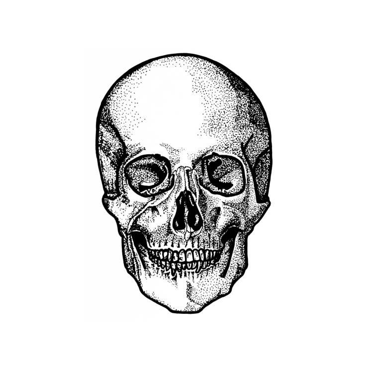 Skull by Samantha Ritchie, Ritchie Artwork