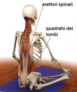 Erettori Spinali e Quadrato dei Lombi