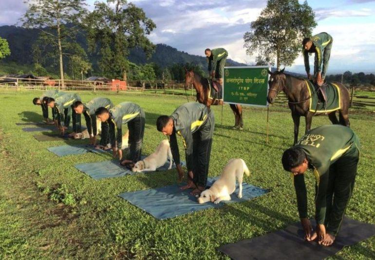 Animal Yoga - Yoga on Horse