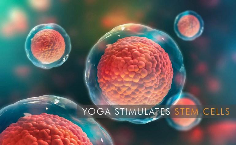Yoga Stimulates Stem Cells