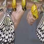 Resilienz durch Yoga © butterflies-1863444/Pixabay