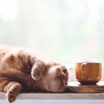 Comfortzone lessen yoga_800x420