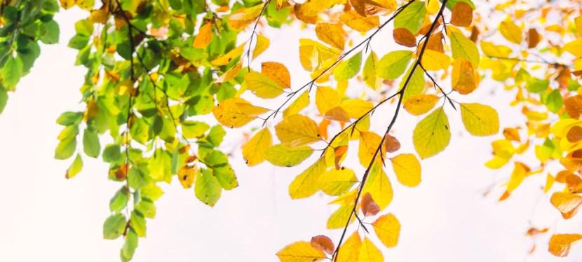 Het seizoen van verandering: de herfst