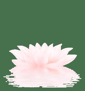 single_lotus-cropped