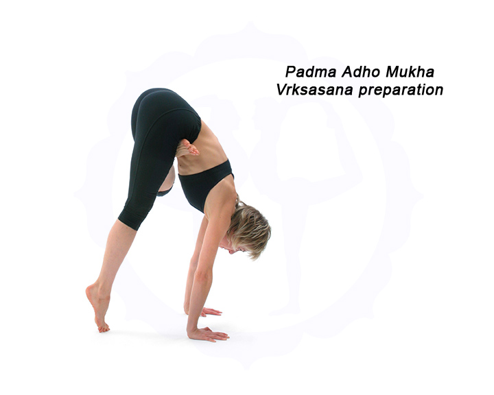 Bianca Machliss in Padma Adho Mukha Vrksasana preparation