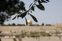 "izrael  Йога тур по Израилю ""Дороги Женщины"" 5 13 марта 2011:"
