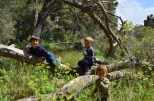 Buskett Forest_588