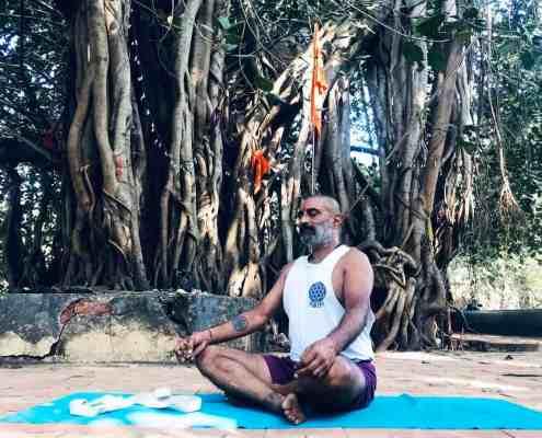 Sacred Trees of India Yoga