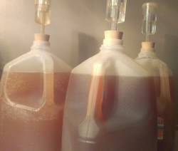 ginger ferments