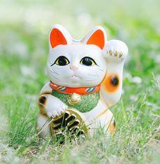 佐賀県高島の酒屋にいるネコ福ちゃん|宝くじ高額当選させる招き猫「坂上どうぶつ王国」放映