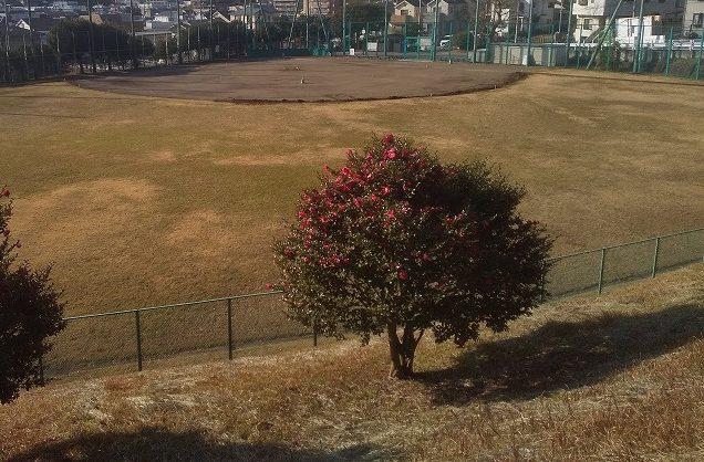 神の木公園野球場上