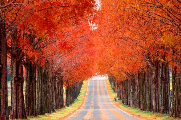 🍁車で見に行く紅葉狩り🍁