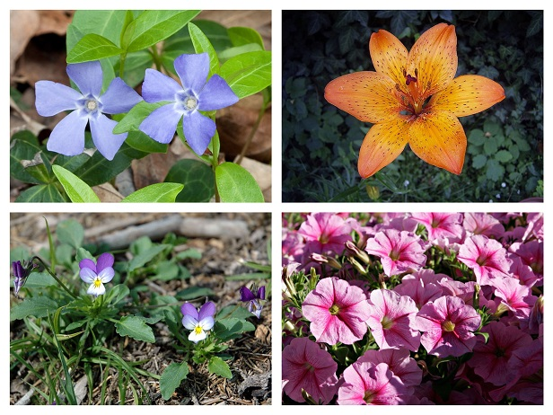 Flowers Not To Frown Upon During Allergy Season Yolis