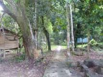 17-Langsat River Walk (800x600)