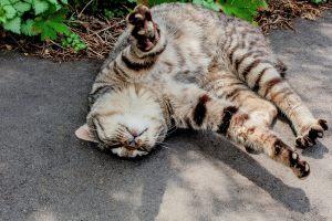 わがままな猫の画像