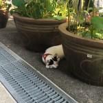福井県越前市、御誕生寺は猫だらけ!猫寺と周辺スポットを楽しむ。