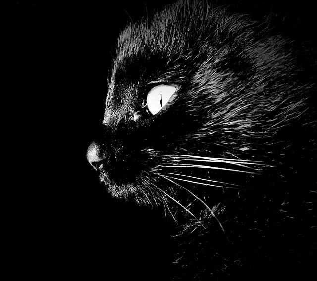 cat-1387346_640