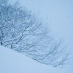 冬季うつの対策は?冬だけ暗い自分を、光・食事・お風呂等で乗り越える!