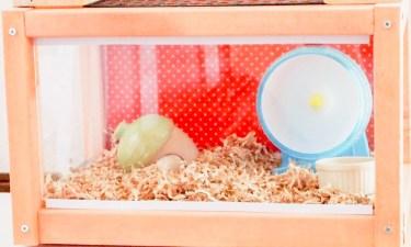 ハムスターの巣箱は100均アイテムでも代用可能!巣箱の選び方