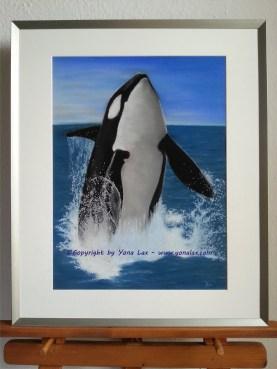 ORCA WAL • 300€ • 47x35cm/60x50cm