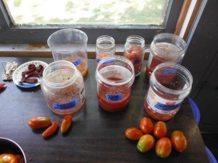 fermenting tomato seeds
