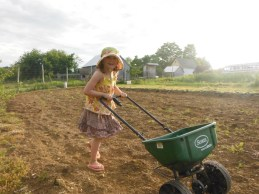 spreading cover crop seed 2