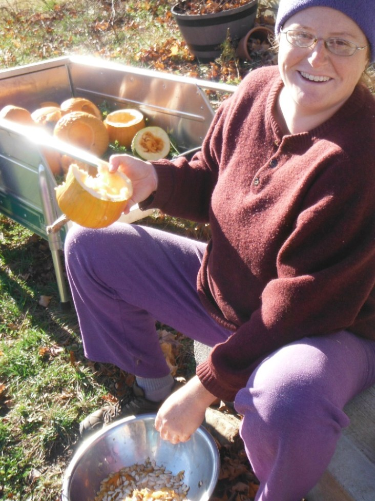 connecticut field pumpkin seed harvest