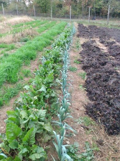 october view of leeks, carrots, beets, mulch and cover crop