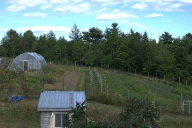 summer garden view 2020