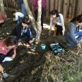 Animal Release for Worms