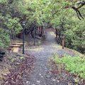 Meditation Bench on Trail