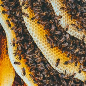yellow and black bees on brown and black textile