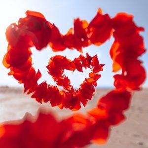 red flower on white sand