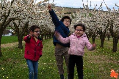 2019 04 06 - Les cerisiers de Jussy - YET89-19