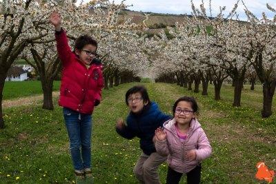 2019 04 06 - Les cerisiers de Jussy - YET89-20