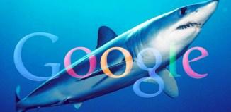 requin-google
