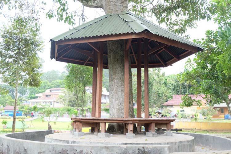 Gazebo menyatu dengan batang pohon di Ngarai Maaram Bukittinggi