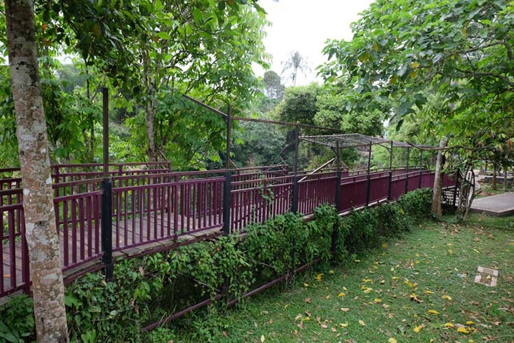 Jambatan selfie Ngarai Maaram Bukittinggi