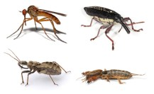 insects, taken from Wikipedia